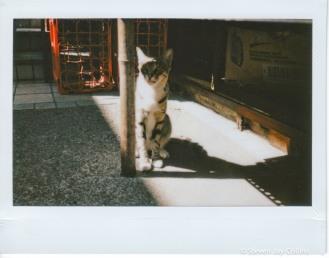 A stray cat sunning him/herself.