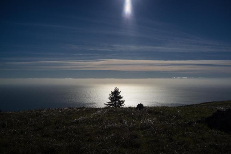 A tree under the sun. Mt. Tam. (Sony RX1r)