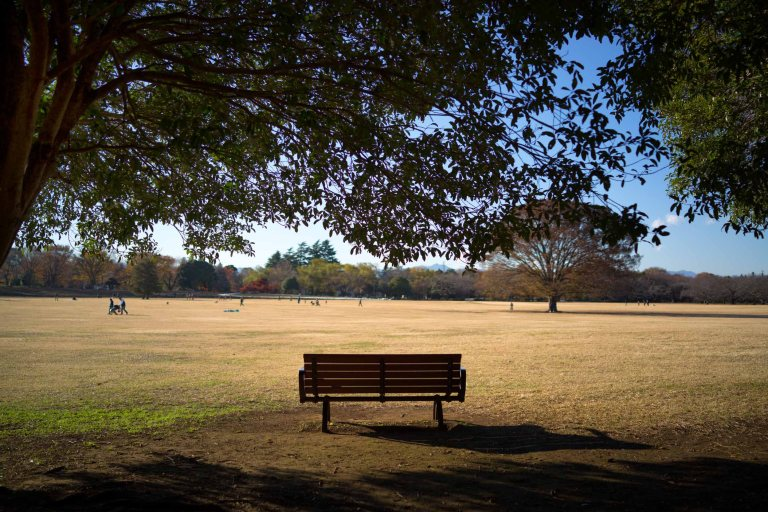 Park bench looking out onto a large open field. (Sony RX1r)