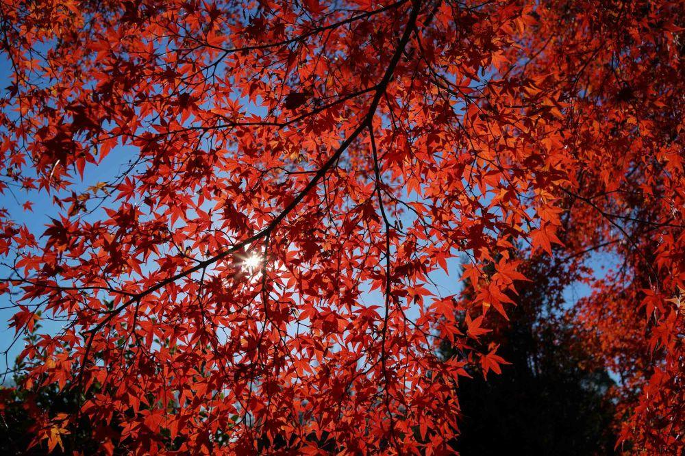 Deep, rich reds. (Sony RX1r)