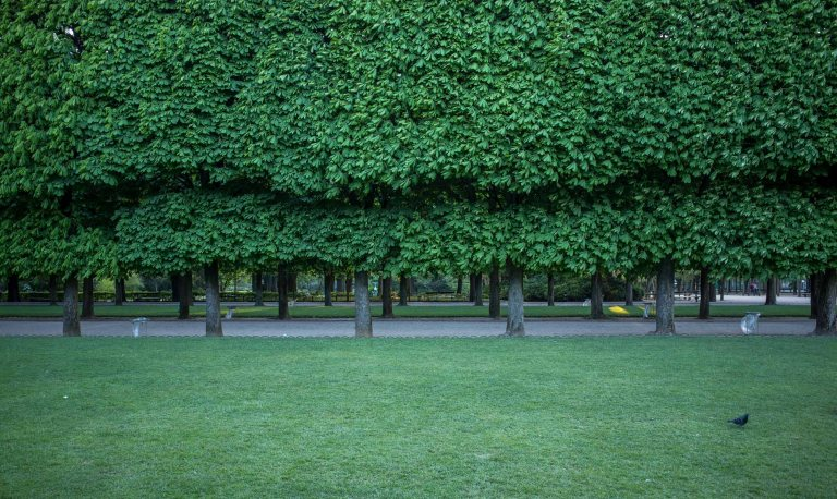 You can expect to see perfectly manicured and healthy trees throughout the park.