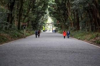 Just one of the wide walkways near the Meiji Shrine in Yoyogi Park.