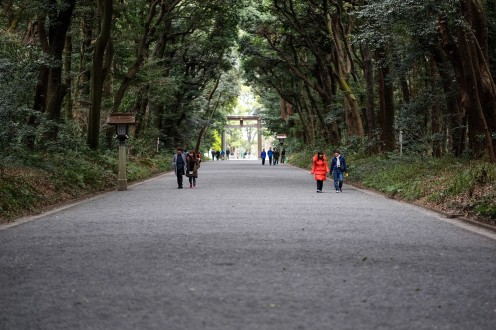 Just one of the wide walkways near the Meiji Shrine in Yoyogi Park.